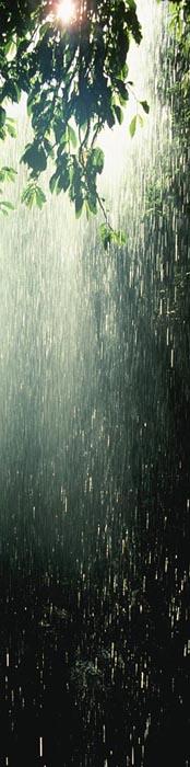 Rain in Australian Rainforest